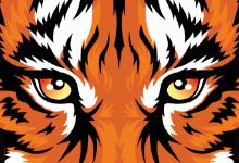 Versailles Tiger Live