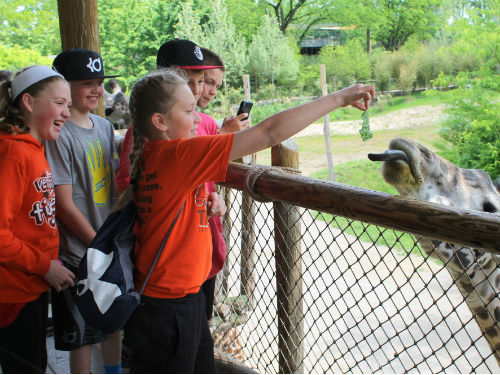 Giraffes with students at the Cincinnati Zoo